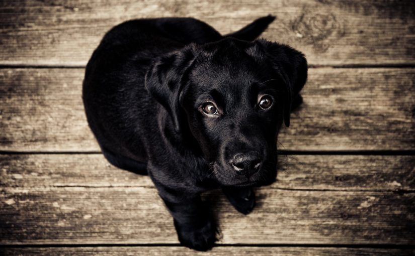 098 Your token black dog